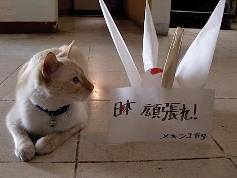 1126. Tere e Ichigo 1