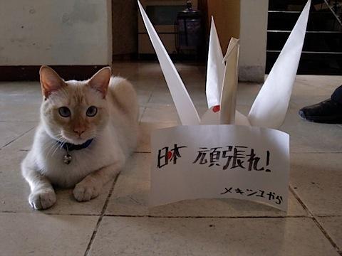 1126. Tere e Ichigo 2